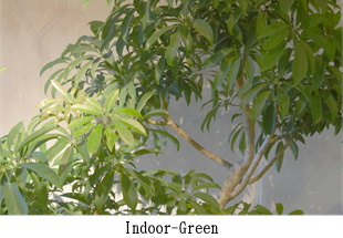 indoor&outdoor-green